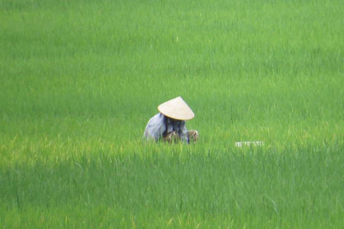 Vietnam dating agenzia incontri BVI
